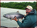 Big King Salmon on the Nushagak